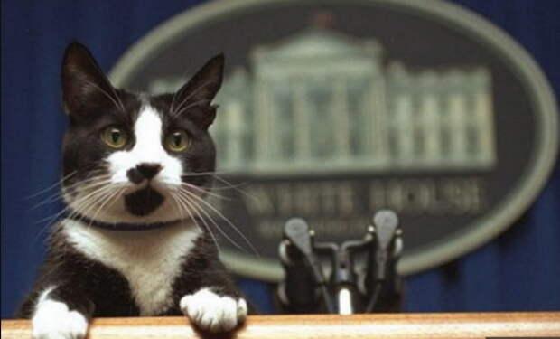 В США запретили есть кошек и собак