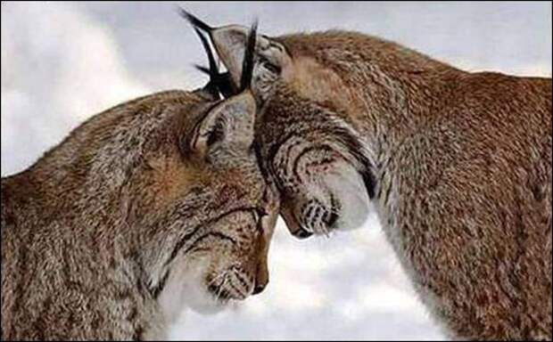 Существует ли любовь у животных?