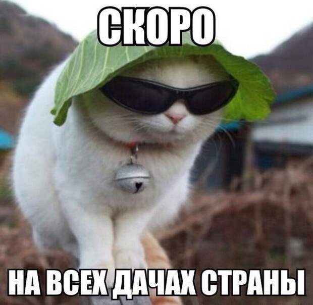 Смешные картинки про котов! видео, демотиваторы, животные, коты, прикол, юмор