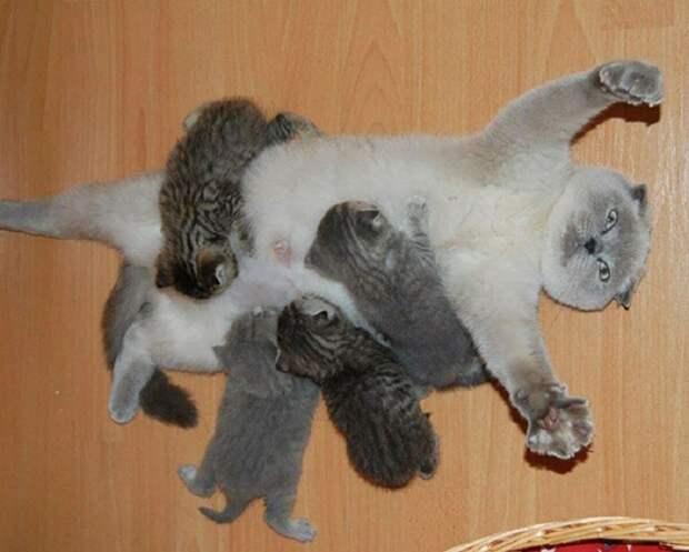 Заботливые животные со своими малышами