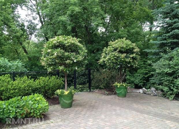 Какие деревья можно вырастить в контейнерах