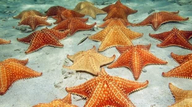 7 фактов, доказывающих, что морские звезды — это поистине жуткие морские чудовища