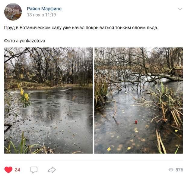 Пруд в Главном ботаническом саду покрылся льдом