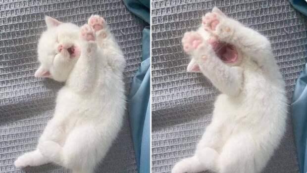 Без кота и жизнь не та! А с котом… смотрите сами