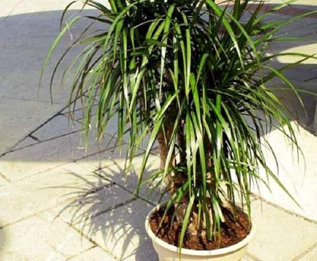 тенелюбивые и влаголюбивые растения