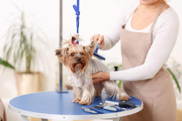 Парикмахерские для собак: косметический уход для собак