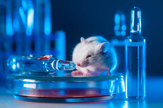Учёные управляли с помощью смартфона находящейся под кокаином мышью
