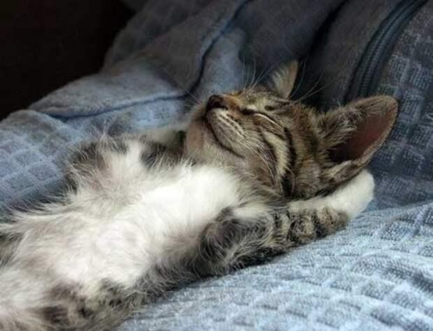 Спящие коты - фото