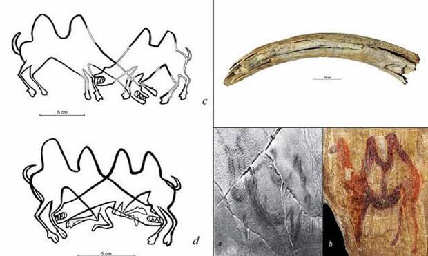 Верблюды жили в Сибири 13000 лет назад