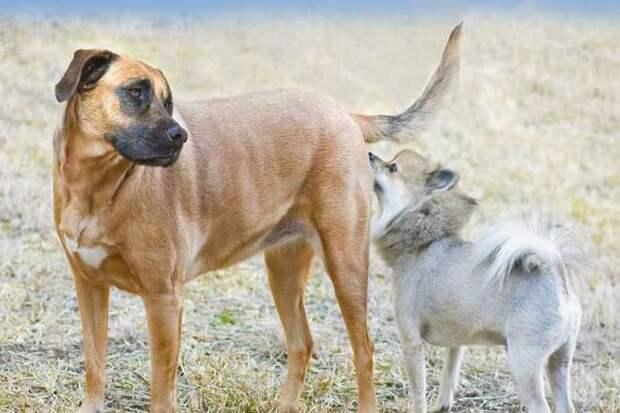 собаки нюхают друг друга