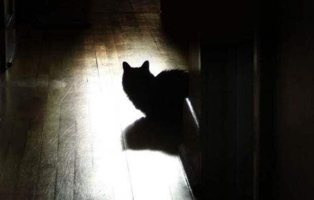 Не всем кошкам нравятся ночные-уличные гуляния, некоторым ночные-домашние больше по душе