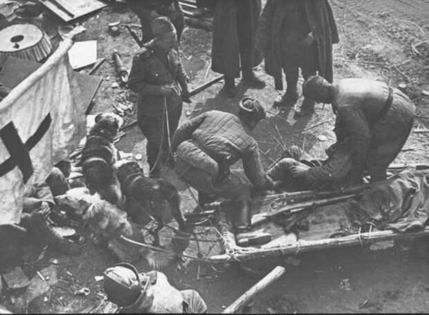 Собаки в Великой Отечественной войне