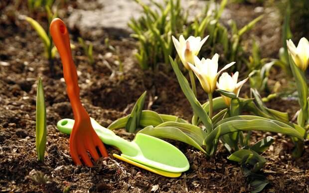 Садоводы, не проспите весну!