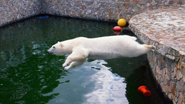 Рыбное мороженое и холодный душ: как животные Ленинградского зоопарка переносят жару