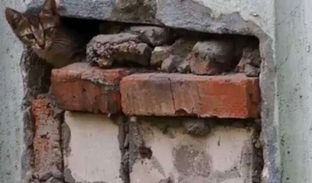 Казанцы пожаловались нажестокого председателя ТСЖ, закрывшего вподвале кошек