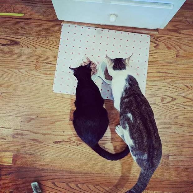 Нежный папа-кот не отходил от беременной возлюбленной история, история спасения, коты, котята, кошки, любовь, мило, помощь животным, трогательно