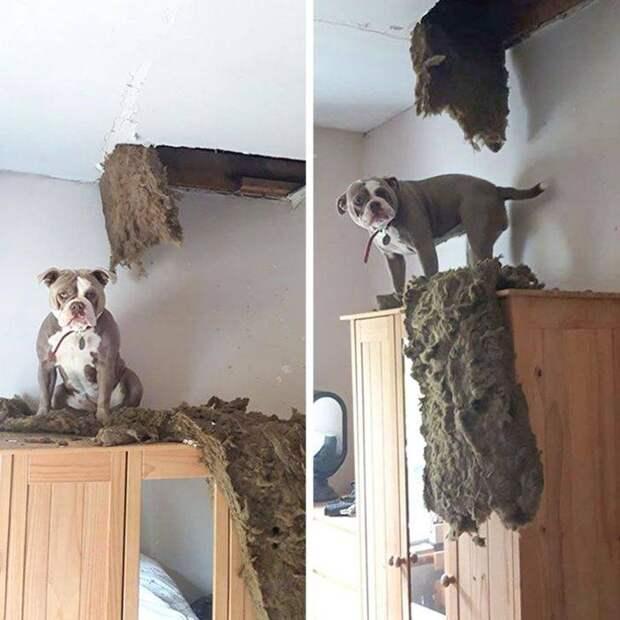 12 котов и собак, у которых ни стыда, ни совести