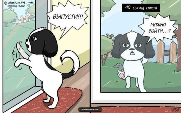 17 комиксов о жизни собачки Руби, которые развеселят каждого, кто хотя бы день прожил с собакой домашний питомец, комикс, позитив, рисунок, собака, умора, юмор