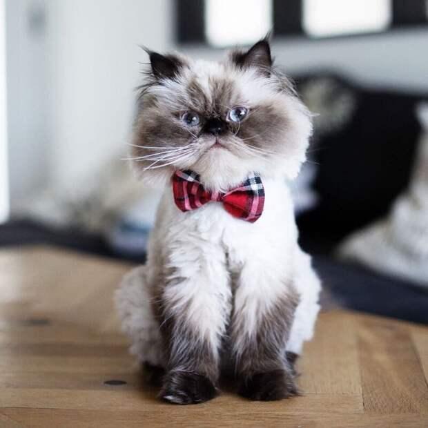 Никто не знает, почему Нон такая злюка животные, кот, милота, мимика, морда, ненависть