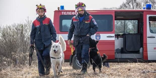 Уши, лапы и нюх: столичные служебные собаки помогли спасти 25 человек в этом году