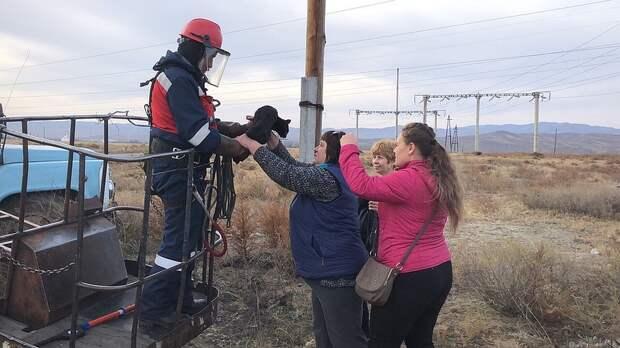 Спасенного передали волонтерам. Фото: Тываэнерго.
