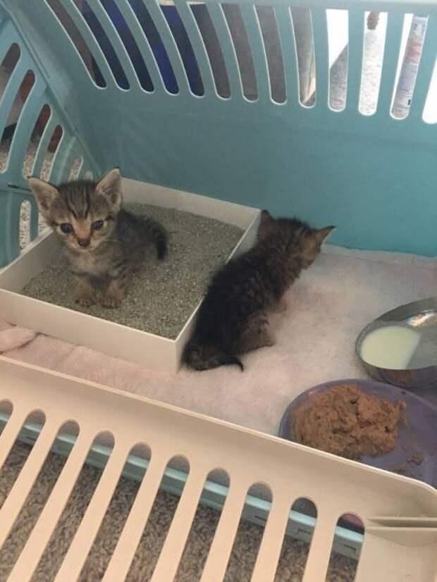 Крошечный чудо-котенок размером в два раза меньше обычных котят получил второй шанс на жизнь