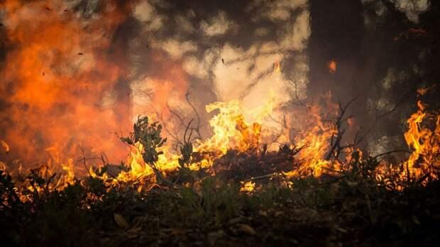 Поджог травы в Нижегородской области привел к пожару в восьми жилых домах