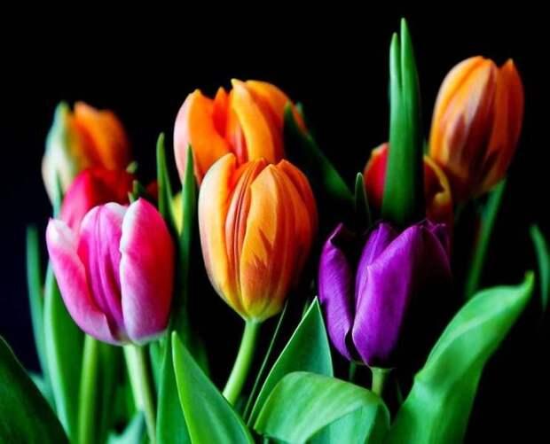 Москвичкам подарят на улицах 300 тысяч тюльпанов