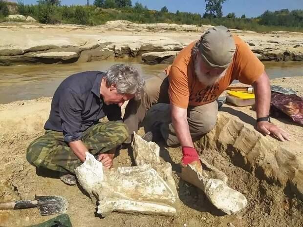 В Белореченске нашли останки древнего слона