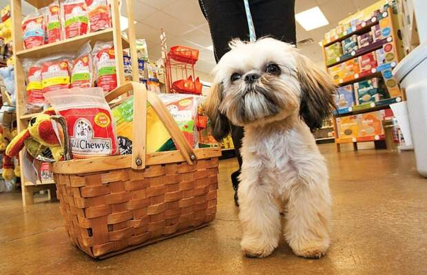 В Госдуме будет рассматриваться закон, запрещающий продавать животных в зоомагазинах и на рынках