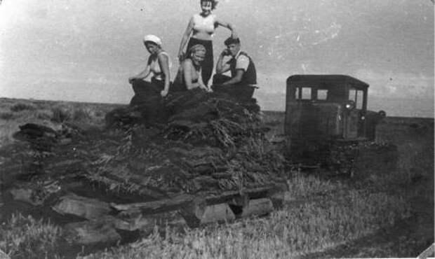 Освоение целины в СССР: почему этот проект полностью провалился