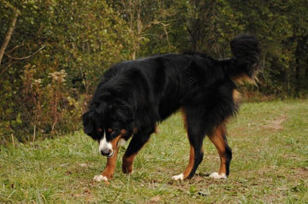 Четвероногие выживальщики: собаки, созданные для приключений