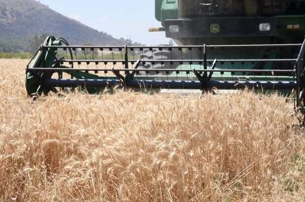 Минсельхоз сообщил о росте пошлины на экспорт пшеницы из России