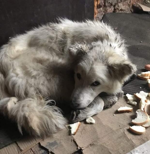Из больных и облезлых в статных красавцев: забота псковских зоозащитников сотворила чудо