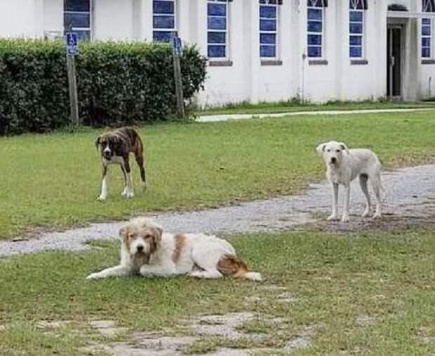 Из трех псов один отказался верить в доброту, и женщина решила завоевать его доверие
