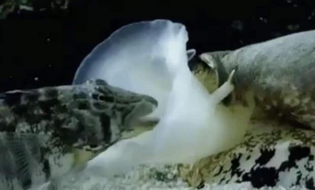 Странное существо засосало рыбу