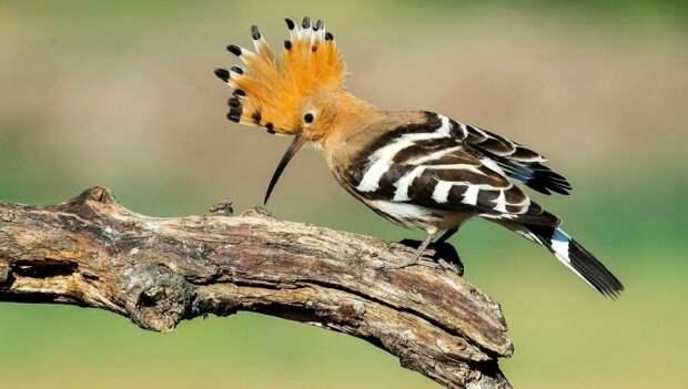 Представители фауны с самыми странными в мире названиями и внешностью