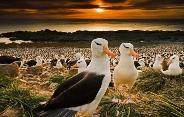 Альбатросы спят во время полета.