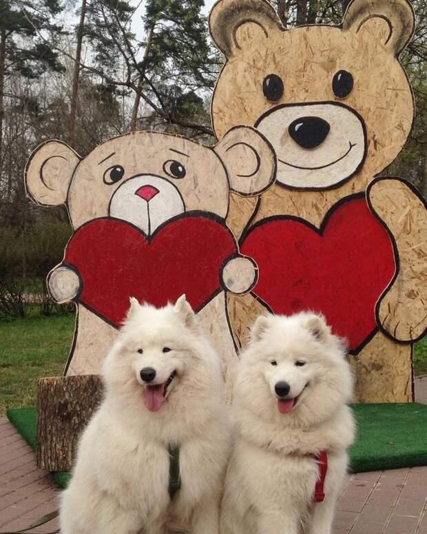 Фото дня: медведи из Лосинки встретили сородичей