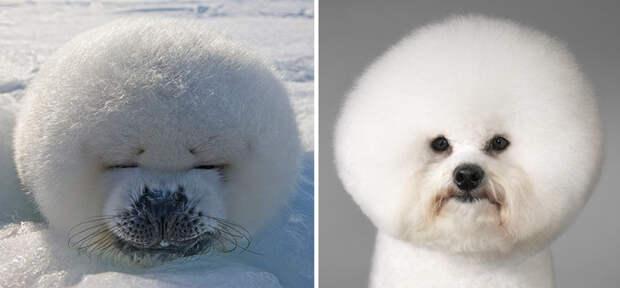 25.  животные, собака, сходство, тюлень