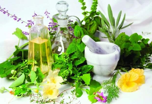 Рецепты из растений при атопическом дерматите