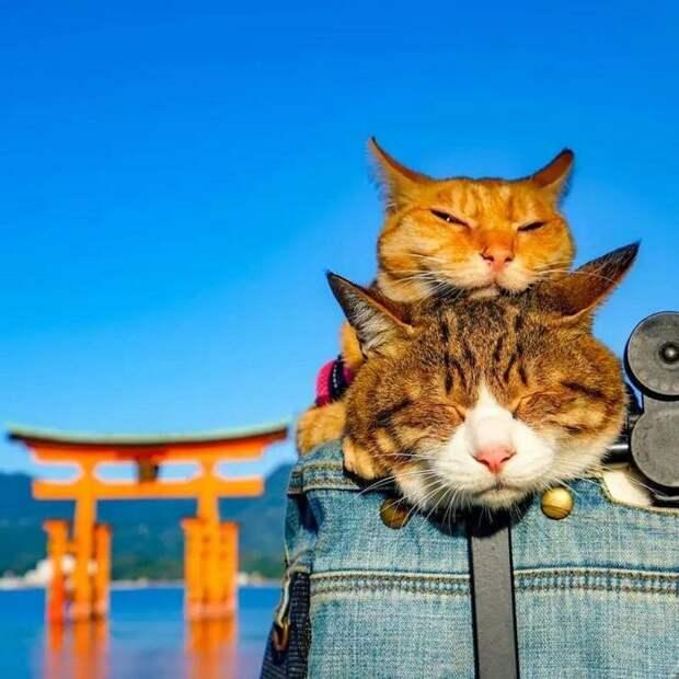 Все их приключения задокументированы в фотографиях, которые помогли им собрать более 6800 подписчиков в Инстаграме в мире, домашний питомец, животные, кошки, люди, природа, путешествие