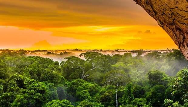 Какие тайны древних народов Амазонки раскрыли археологам космические деревни