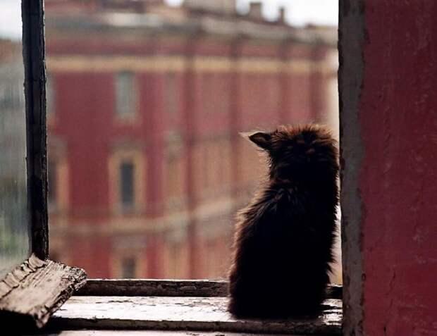 Кошачьи мечты