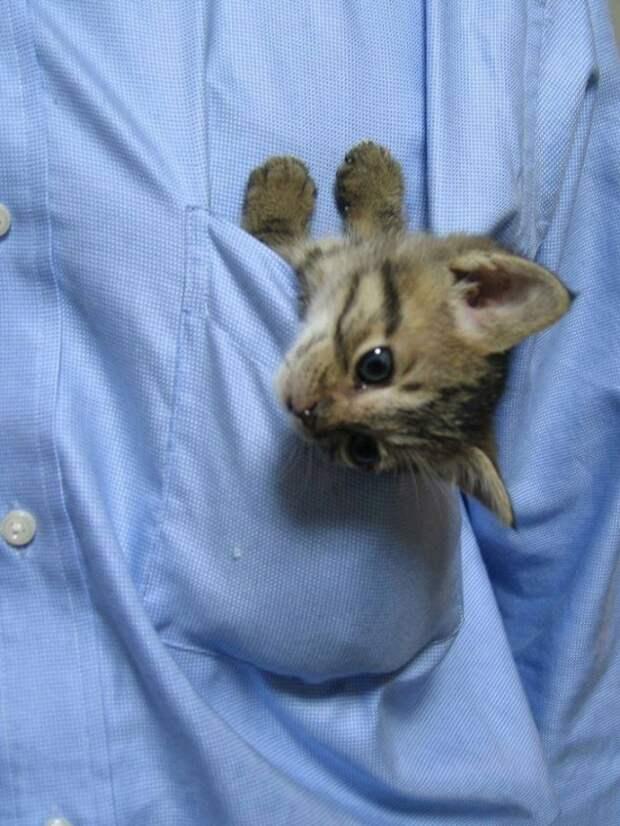 Диагностический кот