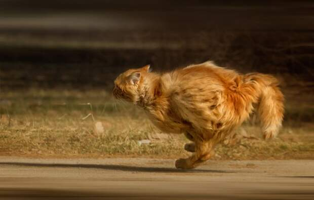 Почему грозный кот Бандит прячется под диван, когда произносят слово «мед»