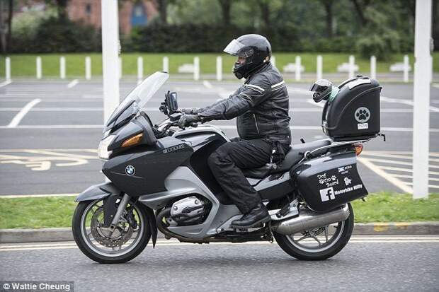 Байкерша Милли - самый очаровательный мотоциклист, покоривший тысячи сердец животные, забавно, истории, мотоциклист, мотоциклы, питомцы, собака, собаки