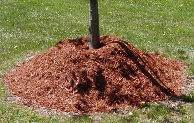 Стоит ли добавлять опилки под деревья и под кустарники
