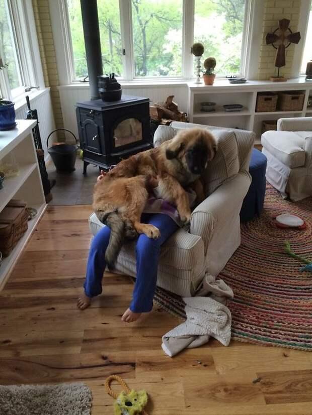 20 собак, которые понятия неимеют оличном пространстве