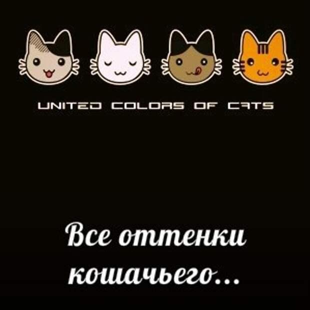 Приглашаем посетить Международный день Петербургского кота!!!